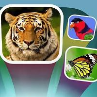 Игра Угадай животное онлайн